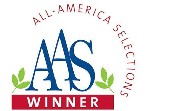 AAS Winners