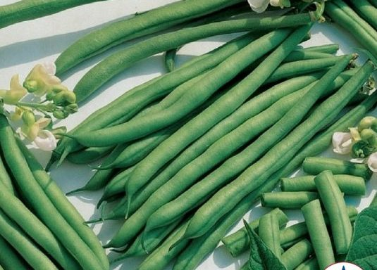 Bean 'Kentucky Blue Pole Green'