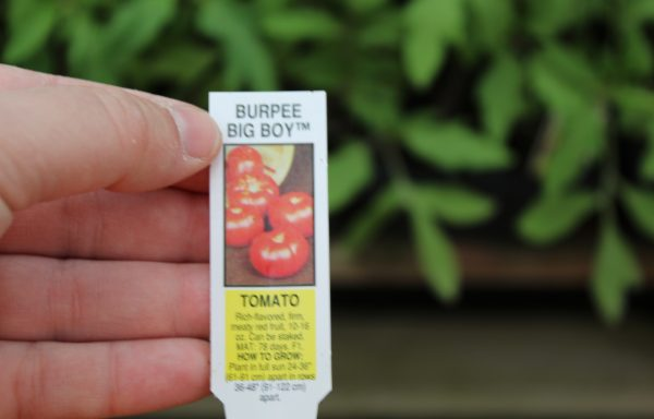 Tomato 'Burpee Big Boy' (F1)