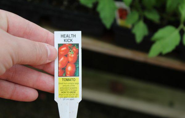 Tomato 'Health Kick' (F1)