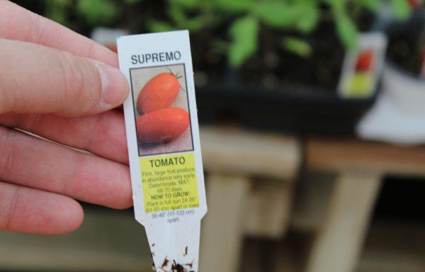 Tomato 'Supremo' (F1)