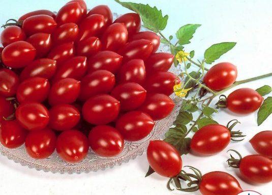Tomato 'Sugary' (F1) (AAS Winner)