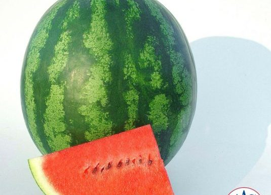 Watermelon 'Shiny Boy'