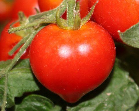 Tomato 'Heartbreaker Dora'
