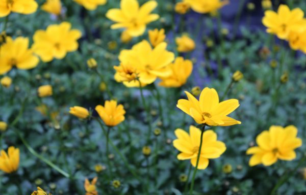 Bidens 'Golden Empire'