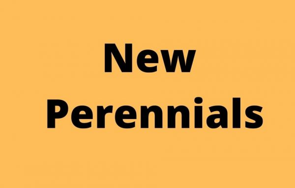 New Perennials
