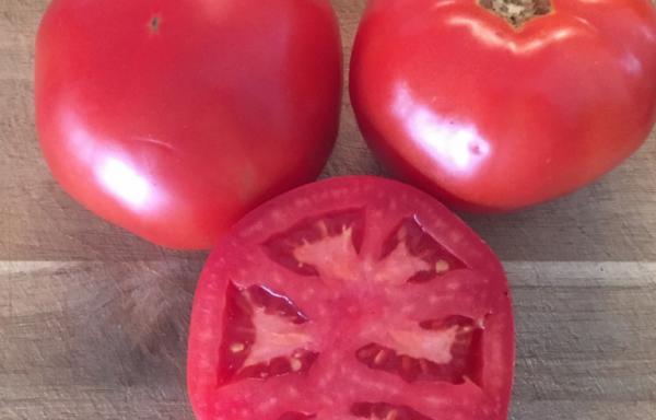 Tomato 'Galahad' (AAS WINNER) – (New For 2021)