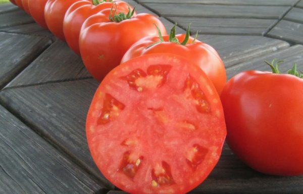 Tomato 'Mountain Merit F1' (AAS WINNER) – (New For 2021)