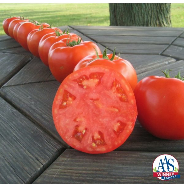 TomatoMountainMerit