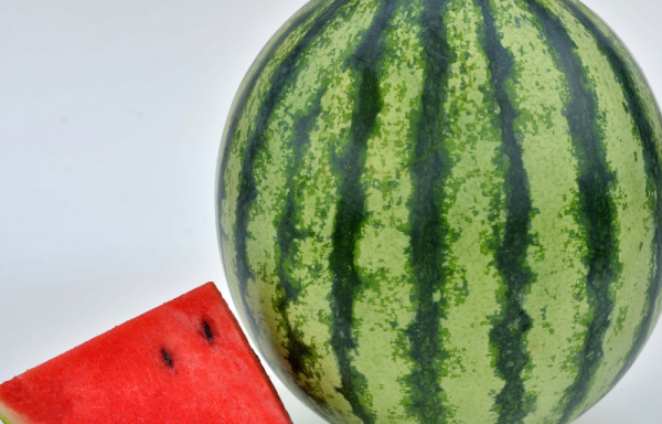 Watermelon 'Mambo' (AAS Winner) – (New For 2021)